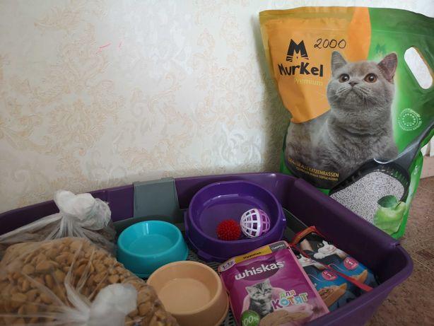 Старт набор для котёнка по выгодной цене! Лоток, корм и т.д.