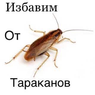 Тараканы Муравьи Клопы Блохи Клешь Мыши крыс Ос 100% г/р Дезинфекция