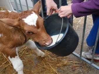 Продам телята и бычки 4 месячные