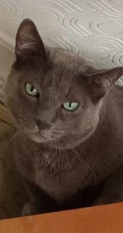 Потерялся кот!!!