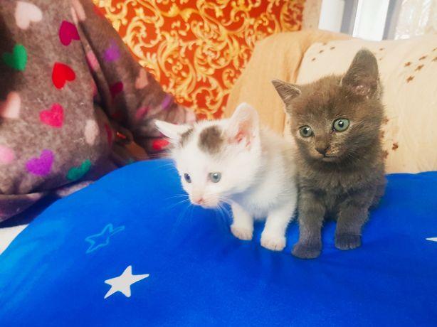 2 pisici donez! F frumoase