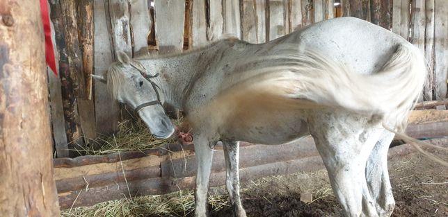 Продам старого доброго коня, или обменяю.