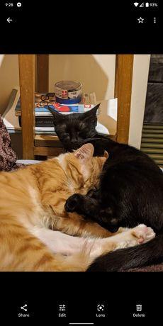Ofer spre adopție pisici