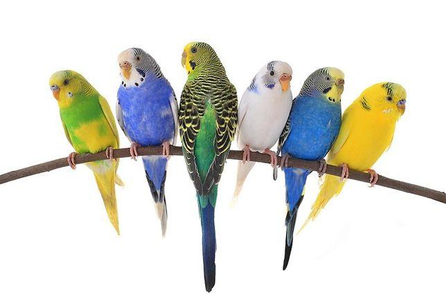 Волнистые попугаи в зоомагазине Живой Мир