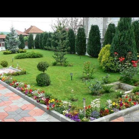 Vând plante ornamentale la cele mai avantajoase preturi