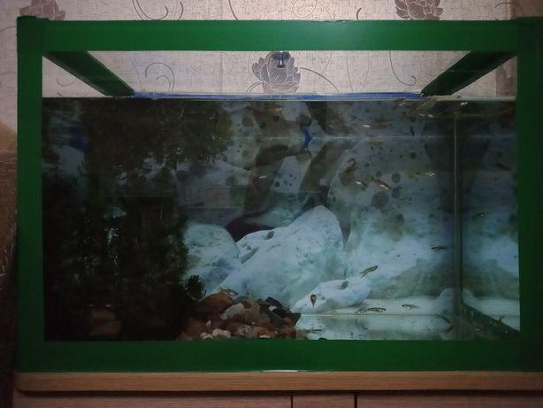 Аквариум с рыбками за 20 тыс.