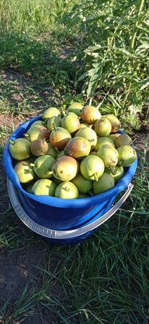 Продам груши (подходят для сушки и на компот)