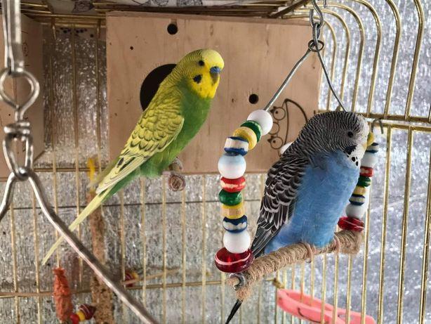 Vand Papagali Peruși