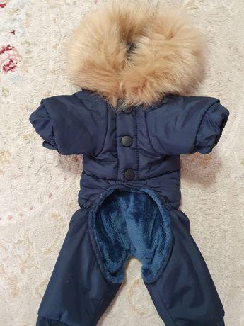 Продам костюм для маленькой собачки