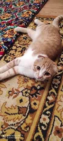 Продам кота красавца