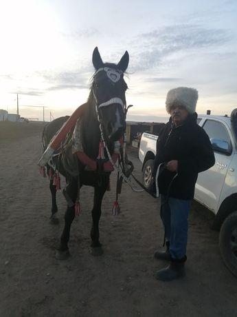 Продам лошадь орловской породы