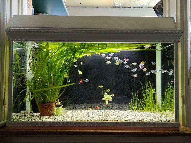 аквариум размер 115х65х40  300литр