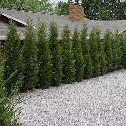 Plante ornamentale și rulou de gazon. Livrare la domiciliu.