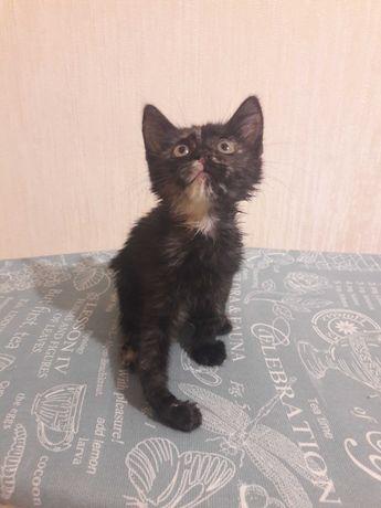 Котенок-хромоножка