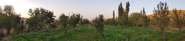 Сельское хозяства Фазенда
