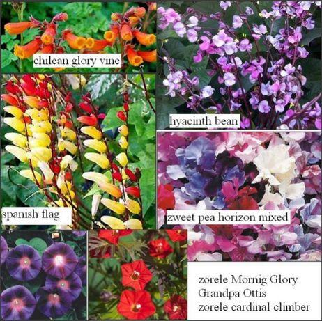 15 seminte 7 varietati de flori urcatoare