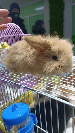 Вислоухие кролики декоративные