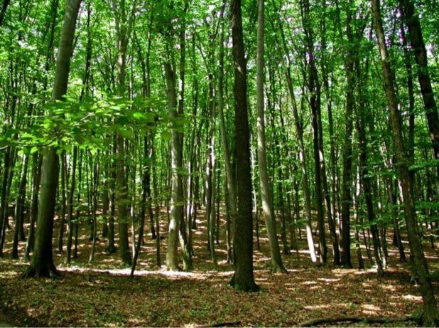 Pădure de vanzare