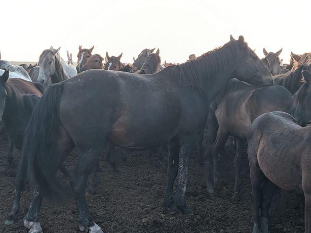 Продам лошадь, 6 лет