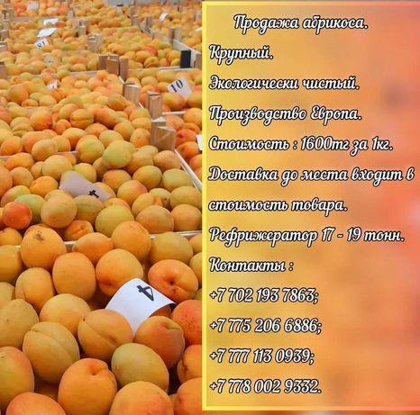Свежие фрукты абрикосы.