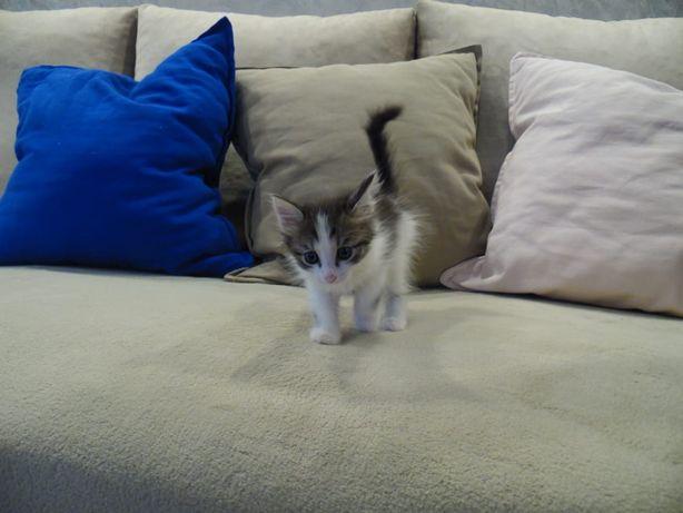 Маленькие_котята
