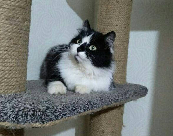 Отдам в хорошие руки Кошечка возраст около 1 года ищет дом. Стерилизов