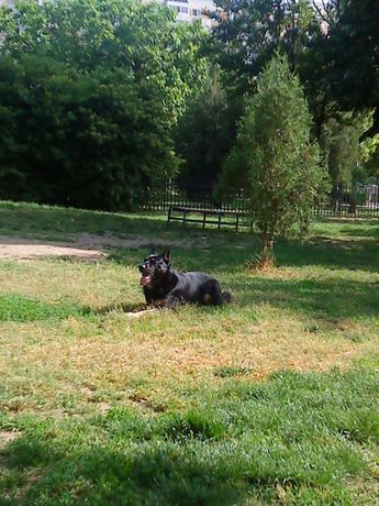 Baby Dogs - Dresaj - Pensiune Canina
