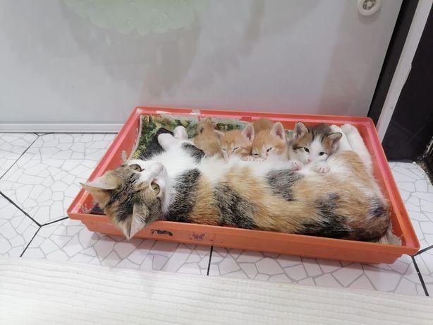 Отдам прелестных котят срочно, в связи с отьездом!