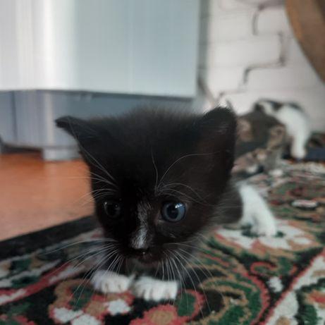 отдам котят даром !