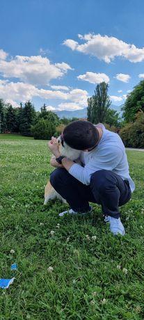 Разходка на кучета за гр.София.