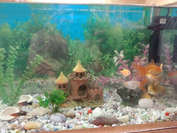 Продам аквариум 70л.