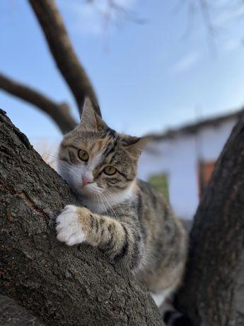 Кошку в добрые руки