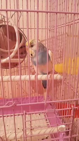 Продаю   попугай вместе с клеткой