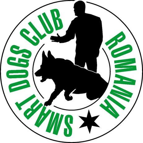 DRESAJ CANIN SMART DOGS CLUB Bucuresti, Pipera, Mogosoaia, Otopeni