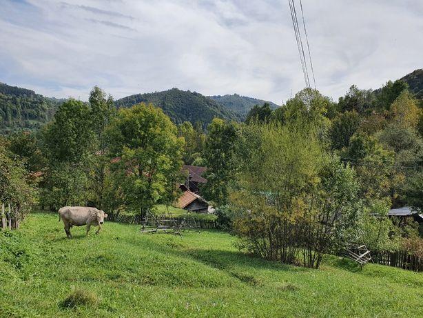 Teren Valea Doftanei 900mp