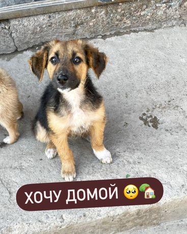 Срочно щенок в хорошие руки