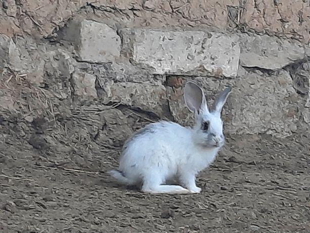 Сррчно Продам кроликов