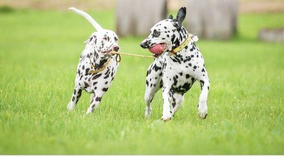 Разходки и услуги за вашето куче