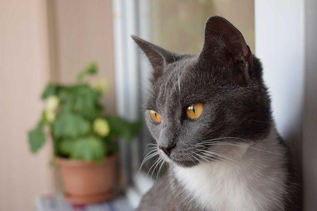 Кот срочно ищет дом!