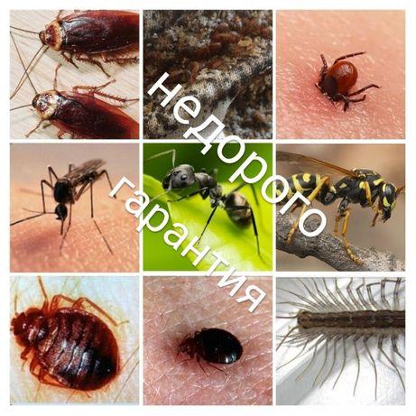 Травим клопов, тараканов, муравьев, гарантия, цены низкие