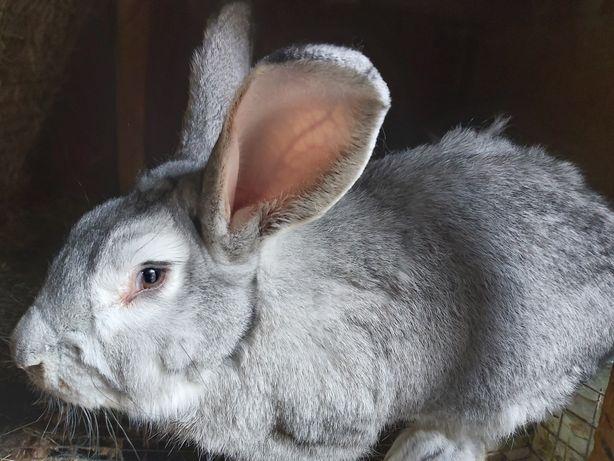 Продам и обменяю кроликов