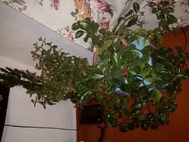 Цветы домашние, комнатные