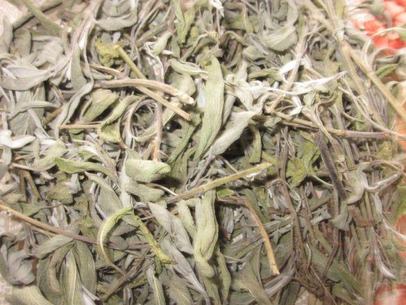 Градински чай/(салвия), Salvia officinalis