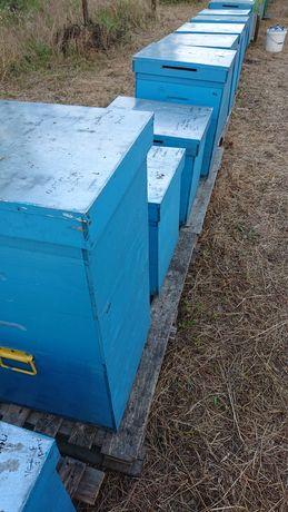 Vind 10 famili de albine,cu tot cu lazi.