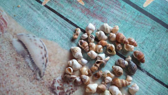 Малки раковинки-30 броя за 7 лева
