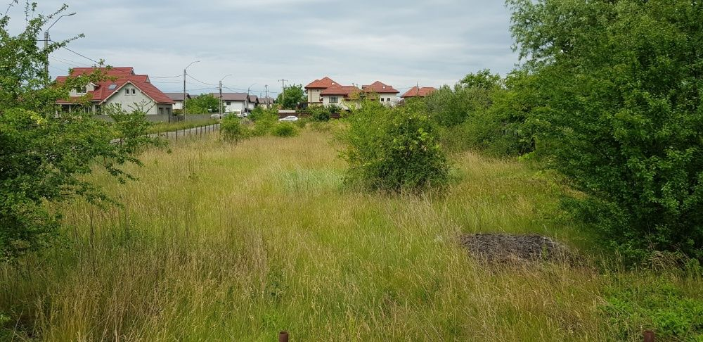 Defrisare curatare cosire tocare arbusti iarba rugi maracini ambrozie