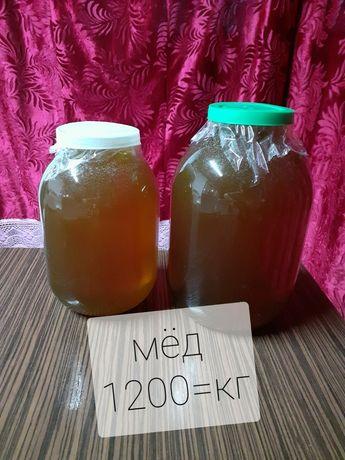 Продам свежий мёд 1200 кг