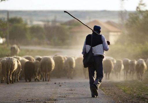 Необходим животновод, пастух.