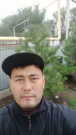 Распродажа хвойных растений сосны ели туи мажевельник кустарники