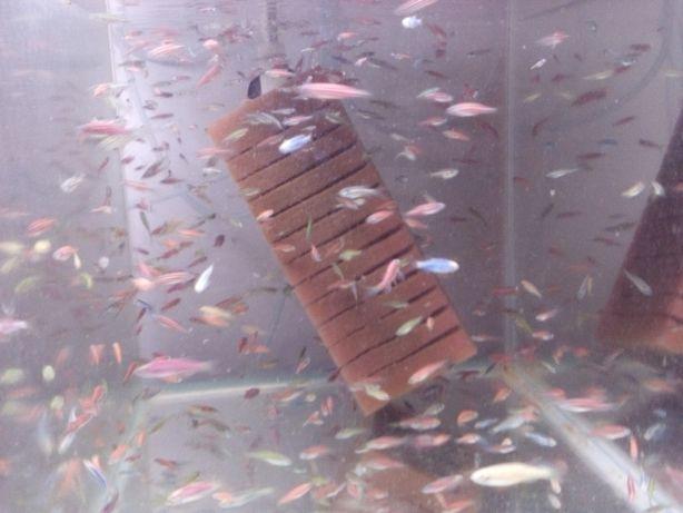 Vand pesti acvariu creveti plante mancare echipamente